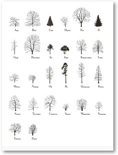 Katie Holten, About Trees
