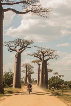Journey through Madagascar with these travel images by Wild Connections Photography Madagascar Travel, Baobab Tree, Travel Images, Connection, Country Roads, Journey, Adventure, Nature, Photography
