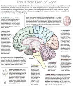 This is Your Brain on Yoga. {Infographic Magic} - This is Your Brain on Yoga. {Infographic Magic} This is Your Brain on Yoga. Hatha Yoga, Sup Yoga, Restorative Yoga, Ayurveda, Qi Gong, Yoga Benefits, Health Benefits, Pranayama, Yoga Meditation