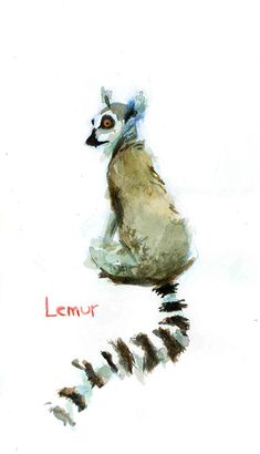 Ring Tailed Lemur - Madagascar