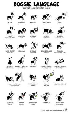 This Can Also Apply to Your Dog