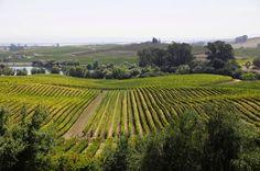 Baden-baden in Germany is one of Europe's best wine regions   Image source: Tastingeurope.com