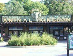 Walt Disney World Guide: Animal Kingdom With Babies & Toddlers