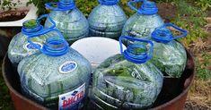 Огурцы в бутылке — новый тренд у огородников. Просто, быстро и выгодно! - life4women.ru