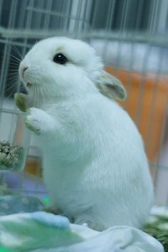 Cute little bunny/rabbit whateves Cute Baby Bunnies, Cute Baby Animals, Animals And Pets, Cute Babies, Funny Animals, Cute Creatures, Beautiful Creatures, Animals Beautiful, Tier Fotos