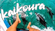 TOP 5 things to do in Kaikoura (New Zealand Hidden Gem) New Zealand, Stuff To Do, Things To Do, Gems, Activities, Top, Things To Make, Rhinestones, Jewels