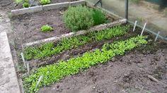 maart: nog even en we eten spinazie en raapsteel uit de kas