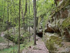 Giant City State Park, an Illinois State Park located nearby Carbondale ... Great for rock climbers.