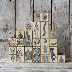candle blocks with vintage anatomy illustrations