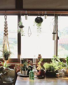 窓から入ってくる光で、ベランダやお庭が無くてもガーデニング!観葉植物など、比較的育てやすい植物だったら気兼ねなく始められますよね♪