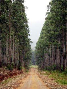 Kowyns Pass                  Bluegum plantation           Rehan Opperman