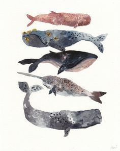 Various watercolour whales