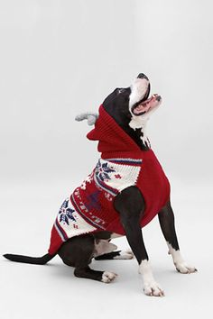 reindeer hooded pet sweater from lands end if i had won the lottery