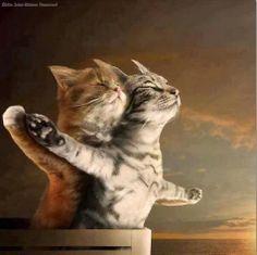 Titanic Kittens.