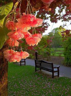 Spring Blossom, Roath Park, Cardiff, Wales by midinotes. Beautiful World, Beautiful Gardens, Beautiful Places, Beautiful Pictures, Simply Beautiful, Spring Blossom, Flowering Trees, Ikebana, Mother Nature