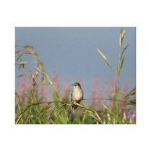 little Hummingbird Stretched Canvas Prints