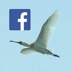 미시령에서 on  Facebook ▶ https://www.facebook.com/misiryeong.info