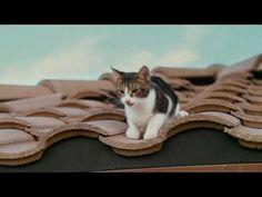 Kém a szomszédban (2010)-Teljes film magyarul Cats, Youtube, Animals, Gatos, Animales, Animaux, Animal, Cat, Animais