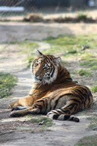 richmond zoo - Bing Images