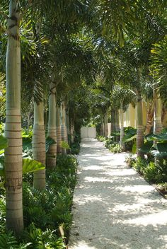 Helecho costeño. DWY Landscape Architects | Residential Landscape Architecture | Sarasota Florida | DWY Landscape