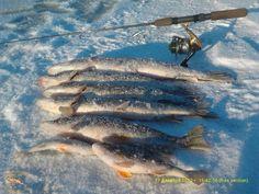 Рыбалка: трофеи, фото и истории
