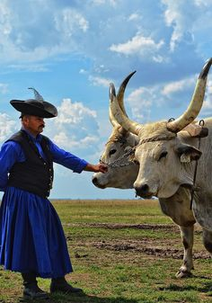 Hungarian long horn grey cattle - Hortobagy Hungary