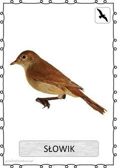 ptak2 Teaching Kids, Kids Learning, Learn Polish, Preschool Games, Bird Drawings, Pet Birds, Cute Animals, Education, Outdoor