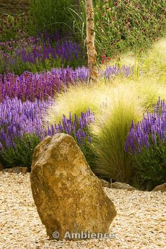 HW: Stipa tenuissima combined w Salvia (or lavendar). Gravel garden with rock, Salvia Wesuwe, Salvia X Superba, Stipa Tenuissima Drought Tolerant Garden, Gravel Garden, Ornamental Grasses, Landscaping Plants, Plant Design, Dream Garden, Garden Planning, Garden Inspiration, Small Gardens