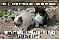 Grumpy Cat and Pokey