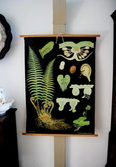 botanical chart of the male fern - theabandonedschool - etsy