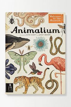 Animalium by Katie Scott and Jenny Broom. Gorgeous illustrations!