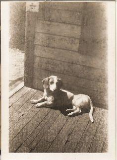 vintage dog photo  sweet old hound dog name by vintagewarehouse, $2.50