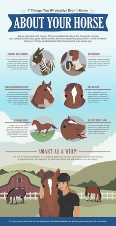 7 Things You (Probably) Didn't Know About Horses.