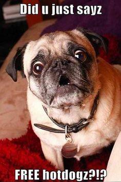 Vitamin-Ha – Funny and Cute Pugs (14 Pics)