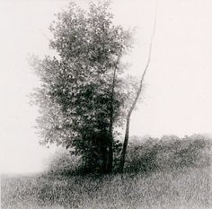 A Forest, Light and the Shade II, 1992, drypoint etching, by Shigeki Tomura