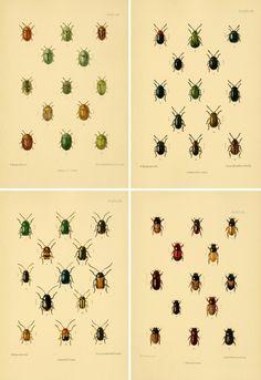 Free printable art - stunning and jewel-like vintage beetle illustrations Free Poster Printables, Free Printable Art, Printable Vintage, Bug Images, Craft Free, Vintage Crafts, Art Wall Kids, Botanical Illustration, Vintage Posters