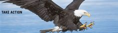 The Endangered Species Act is a remarkable success. A new Center for Biological Diversity analysis of 110 species finds that 90 percent are recovering on pace to meet recovery goals set by federal scientists.