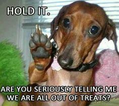 Lol. That doxie's got attitude!