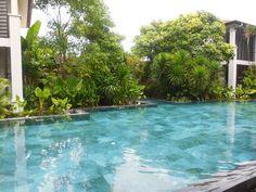 Sea of tropical plants around swimming pool