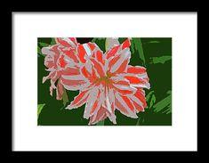 orange, white, amaryllis, flower, nature, photo manipulation, michiale schneider photography, interior decor, framed prints