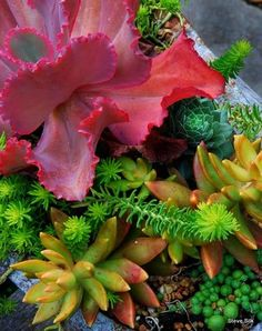 """""""Color is another fun component for designing these dish gardens,"""" blogs Steve Silk on Clatter Valley."""