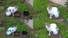 My Sweety Cat Has Different Poses......OMG.......So Amazing http://ift.tt/2ARivNp