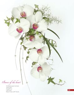 An elegant bouquet of Phalaenopsis Orchids. White Orchid Bouquet, Cascading Bridal Bouquets, Cascading Wedding Bouquets, Bride Bouquets, Bridal Flowers, Floral Bouquets, Floral Wedding, Flower Girl Bouquet, Flower Decorations