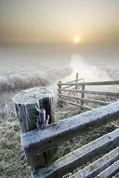 Frost by Bluheart