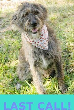 PUPPY (A1680959)I am a female brown and tan Terrier mix. The shelter staff think I am about 3 years old. I was found as a stray and I may be available for adoption on 02/24/2015. — Miami Dade County Animal Services. https://www.facebook.com/urgentdogsofmiami/photos/pb.191859757515102.-2207520000.1425822583./939743806060023/?type=3&theater
