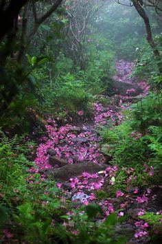 Az emberek jó része ma már városban lakik, szinte teljesen mesterséges, épített környezetben töltik az év nagy részét. Sokuk számára már alig elérhető lehetőség a vidám csatangolás nap, mint nap a szabad természetben, ami 30-40 éve még igen sokembernekmeghatározó élménye volt. Pedig az árnyas erdei utak az erdőkben kellemes sétát ígérnek, éljen bármerre is az …
