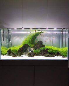 Aquatic Creations Papier Log Haustierbedarf Aquarium-dekoration Dekorationen