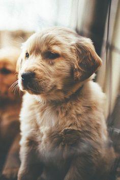 thelavishsociety:  Puppy byZach Allia | LVSH