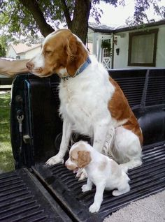 Dog dad and his girl pup how precious!!