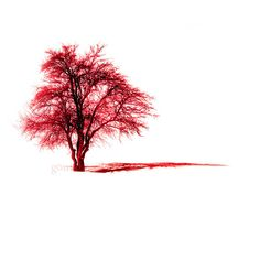 Red tree Nature photography Alone tree fine art by gonulk on Etsy, $30.00